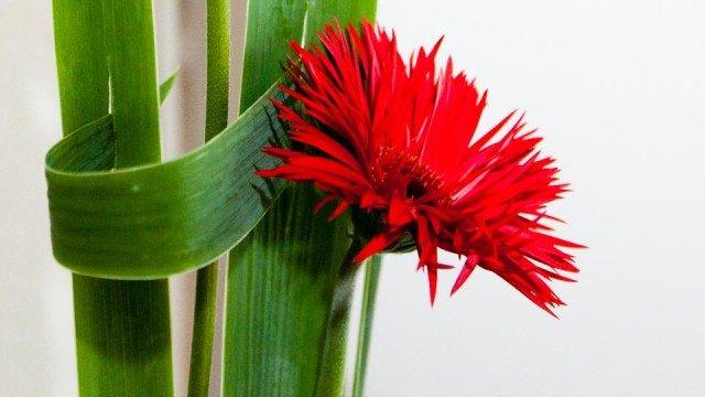 Farbe und Form: Ikebana von Carmen Breuer. (Foto: SMMP/Beer)