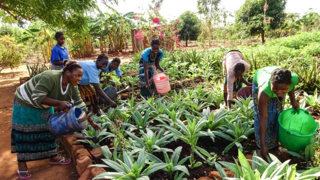 Der nachhaltige Anbau von Obst und Gemüse gehört zum Unterricht der Ordensschwestern für die eigenen Postulantinnen und Frauen aus der Stadt Nametoria in Mosambik. Foto: Sr. Leila de Souza / SMMP